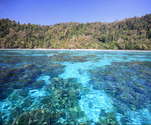 You are browsing images from the article: Koh Rok